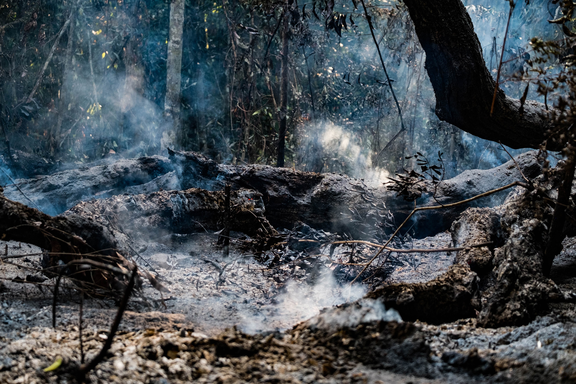 The smoldering remains of burned trees in the Amazon rainforest