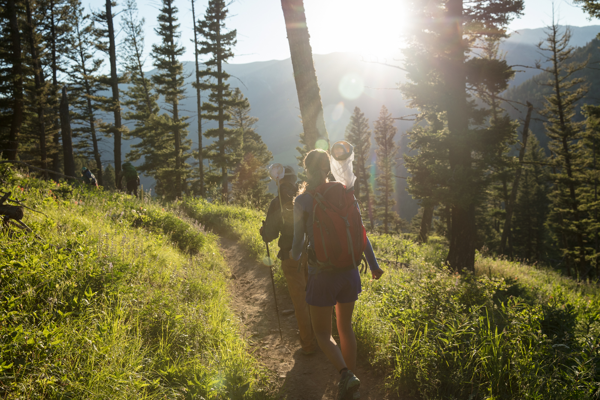 Volunteer citizen scientists hike out to observe butterflies