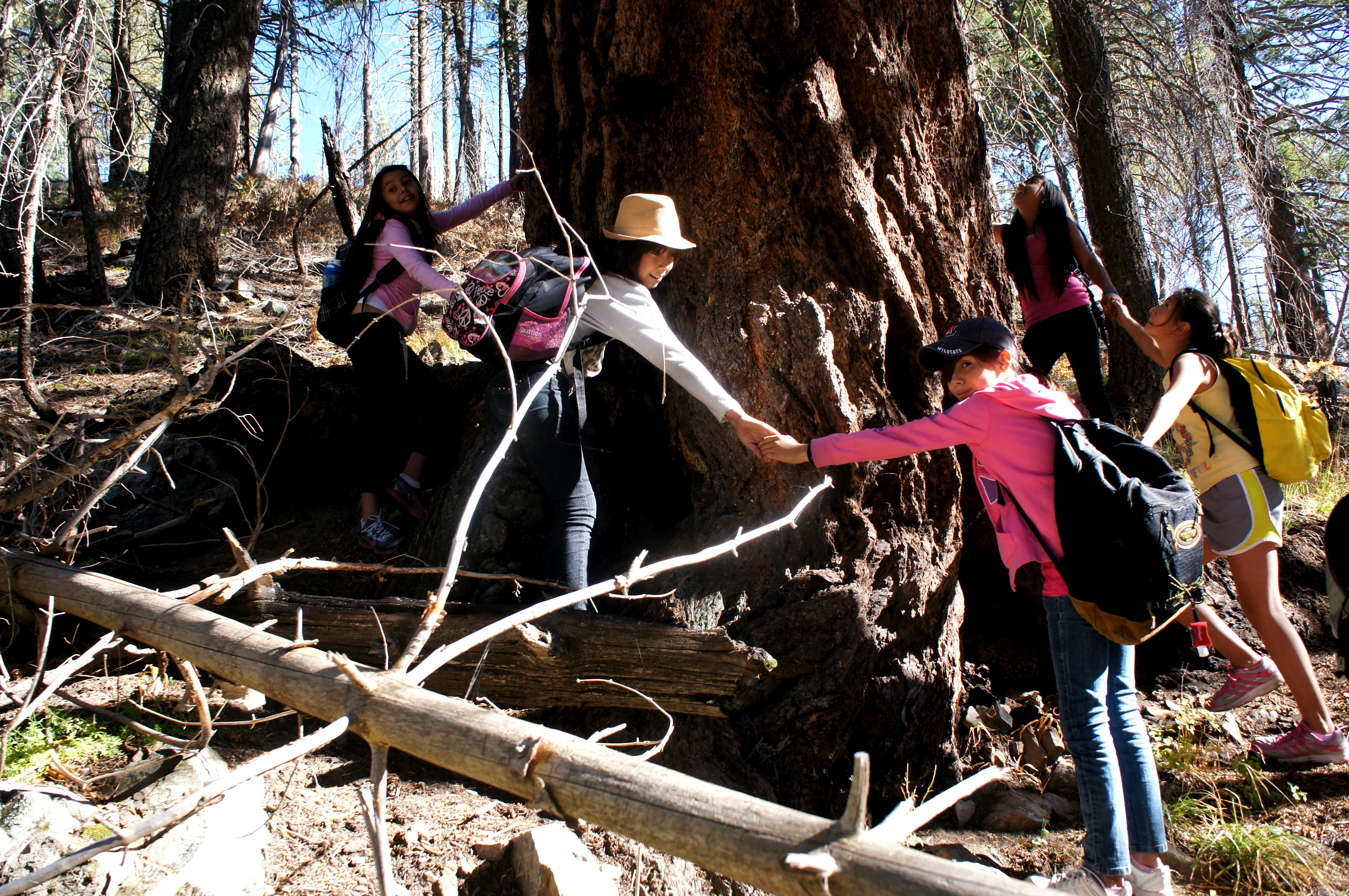 "Students link hands around the ""grandfather tree,"" an ancient pine tree near the Mt. Lemmon SkyCenter."