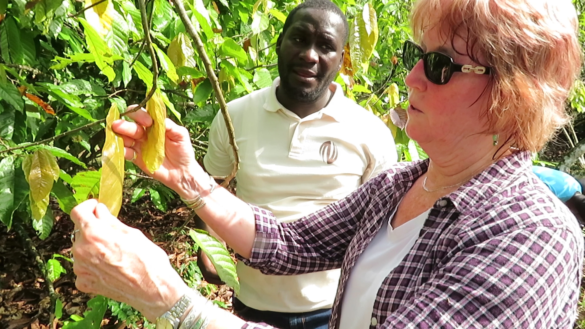 Judy Brown, a plant virologist in the UA's College of Agriculture and Life Sciences, is working with African scientists and farmers to create greater awareness of a disease that is killing cacao trees.