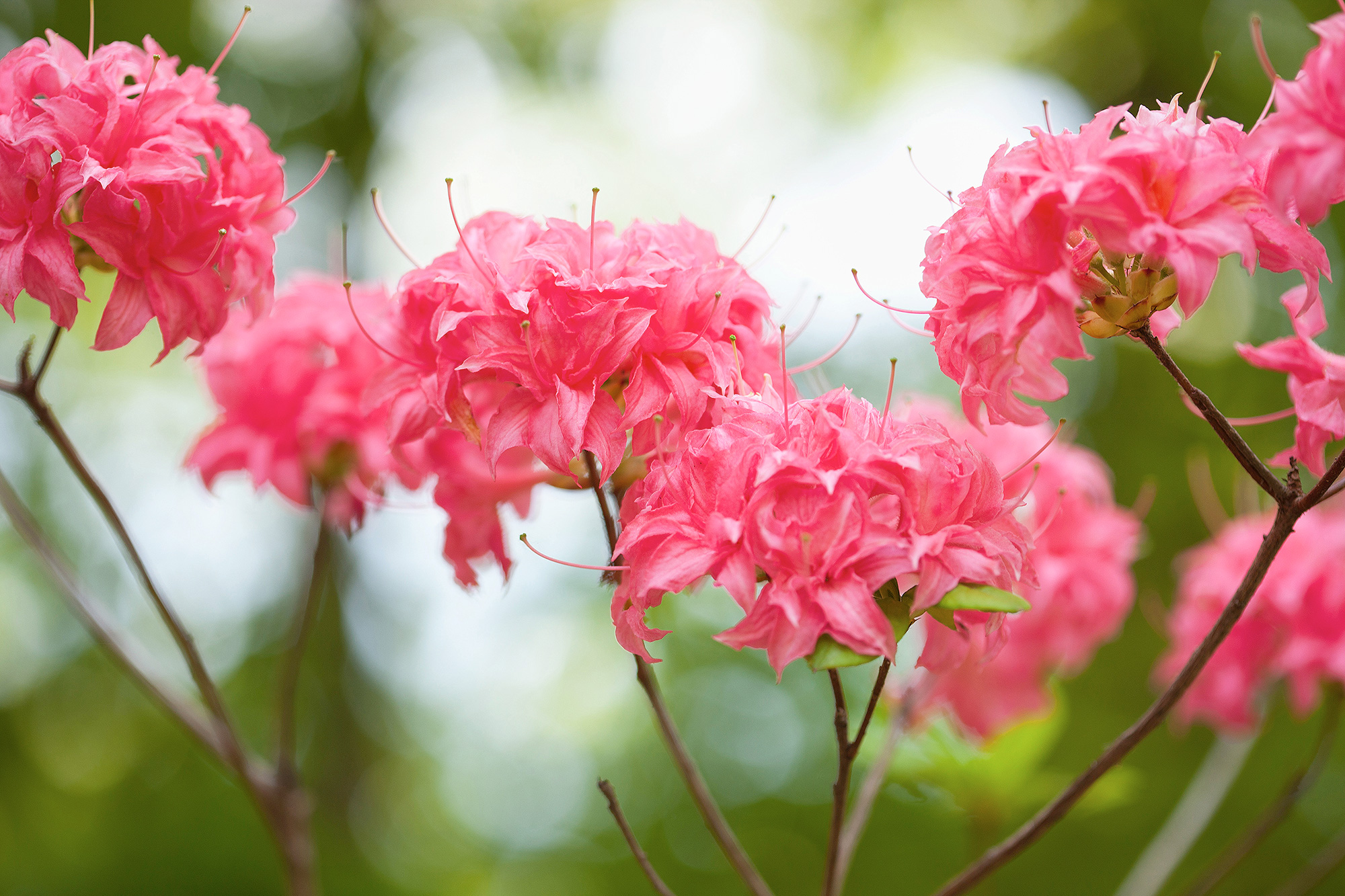 Species traits such as flower color are one of the essential biodiversity variables that can be used to assess biodiversity change through time.
