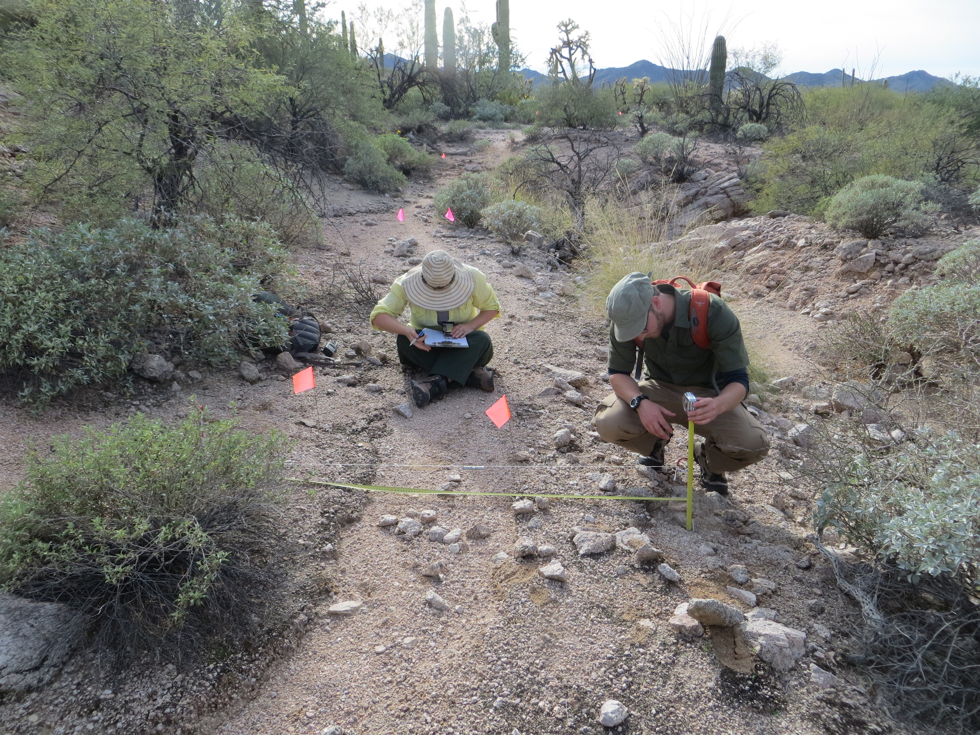 Former UArizona graduate students Sharlot Hart  and Mario Battaglia record the physical attributes of a trail used by the Tohono O'odham in Organ Pipe Cactus National Monument. The work was part of a project to find and document the ancient trails so the