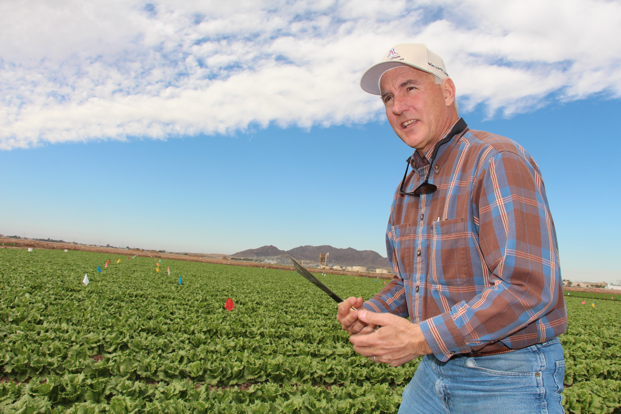An endowed chair in integrated pest management will honor John Palumbo, a cooperative extension specialist at the Yuma Agricultural Center, and his contributions to the Yuma community.