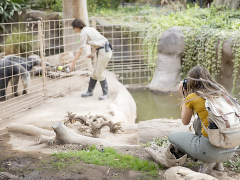 Kacey Seeloff photographs Stephanie Norton, a zookeeper at Tucson's Reid Park Zoo, during an enrichment session with Nico the giant anteater. Giant anteaters from South America are on the endangered species list. The zoo works with specialists from the Association of Zoos and Aquariums to ensure proper breeding practices of the zoo's mascot animal. (Photo courtesy of John de Dios)