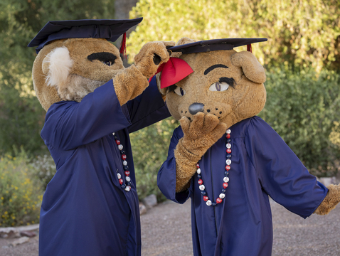 The university's 156th Commencement – its first-ever virtual ceremony – will begin at 6 p.m. on Friday and will be streamed on the Commencement website. (Photo: Chris Richards/Arizona Alumni Association)