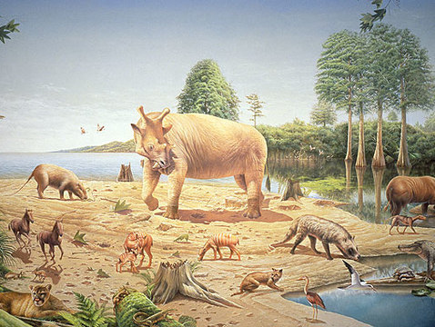 During the Eocene Epoch, alligator relatives swam in the swamps on Ellesmere Island and mammals climbed in the dawn redwood trees. (Image: Bob Hynes, Smithsonian Institution)