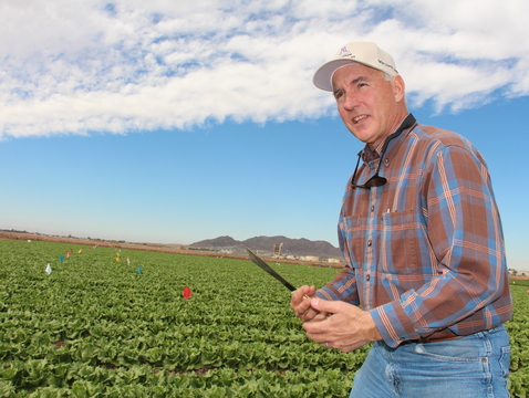 An endowed chair in integrated pest management will honor John Palumbo, a cooperative extension specialist at the Yuma Agricultural Center, and his contributions to the Yuma community. (Photo by Carol Miller)