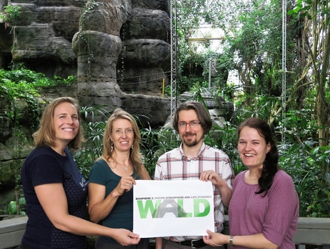 Biosphere 2 WALD members (from left): UA assistant professor Laura Meredith, University of Freiburg professor Christiane Werner, University of Texas - Austin assistant professor Pawel Misztal and University of Freiburg postdoctoral fellow Ines Bamberger. (Photo: Laura Meredith)
