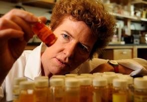 Dr. Janet Funk conducts research on ginger and turmeric because of their anti-inflamatory properties. (Photo credit: Norma Jean Gargasz / UANews)