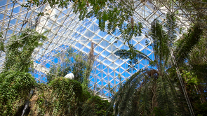 The rainforest biome, at the north end of Biosphere 2, was designed to simulate several tropical rainforest habitats. (Photo: Bob Demers/UANews)