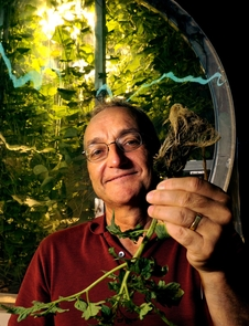 (Click to enlarge) Gene Giacomelli at the Lunar Greenhouse in the UA's Controlled Environment Agriculture Center. (Photo credit: Norma Jean Gargasz / UANews)