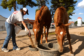Tara Farrell, a UA graduate student studying biology, feeds the horses at the Campus Agricultural Center located on North Campbell Avenue in Tucson. The center is part of the UA College of Agriculture and Life Sciences, one that actively engages in instruction, research and the co-operative extension - original land-grant tenents. (Photo credit: Norma Jean Gargasz/UANews)