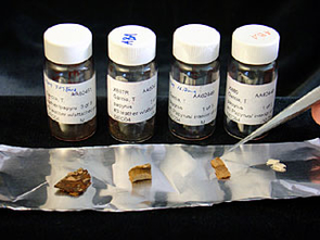 Scientists at The University of Arizona's NSF-Arizona Accelerator Mass Spectrometry (AMS) Laboratory radiocarbon dated these samples of an ancient Coptic manuscript at between A.D. 220 and A.D. 340.  The manuscript contains the only known surviving Gospel of Judas.  Left to right are a sample of leather binding that incorporates some of the papyrus on which the manuscript was written; a sample of just the leather binding; a sample of untreated papyrus; and a sample of papyrus after cleaning. (Photo: Lori Stiles)