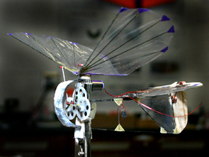 This tiny ornithopter's longest dimension is only 5.2 inches. (To see a larger version, click on the image.)