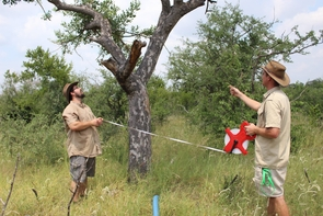 Graduate student Christopher Banotai is trying to curb public perception of the elephants' role in the decline of marula trees, which are ecologically, economically and culturally important in the African savannah. (Courtesy of Chris Banotai)
