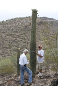Ray Turner, one of the researchers that established the plots in the 1960s, and Robert Webb, a lead researcher and co-author of the paper taking measurements of a saguaro. Susana Rodríguez-Buriticá is grateful of the commitment by the previous generations to ecological monitoring, especially at Tumamoc Hill, and the vision they had of its impact on ecological research. (Courtesy: Susana Rodríguez-Buriticá)