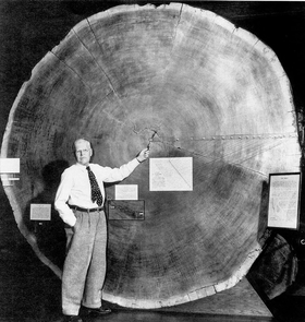 A.E. Douglass, founder of the study of tree-ring research, was instrumental in bringing the sequoia slab to the UA.