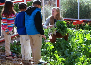 The UA is a top destination for students who want to learn about the connection among food, nutrition, society and health. Pictured is a UA student intern with the Community and School Garden Program, one of many hands-on opportunities for students who are passionate about food.