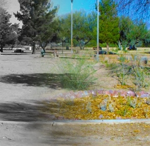 A before (black and white) and after (color) image of Atturbury Wash, a Tucson Audubon site on the southeast side of town that received C2E funding in 2012. (Image courtesy of Brittany Xiu)