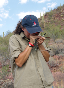 (Click photo to enlarge) UA associate professor Betsy Arnold looks through a loupe to identify a plant found during a BioBlitz excursion in Saguaro National Park. (Photo: D. Stolte/UANews)