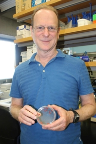 Bruce Tabashnik holds a petri dish with pink bollworm larvae. (Photo by Beatriz Verdugo/UANews)