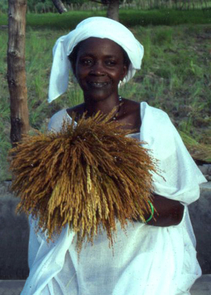 Hawa Sanneh holding freshly harvested African rice in Casamance, Senegal, in October 1987. (Image copyright: Judith Carney)