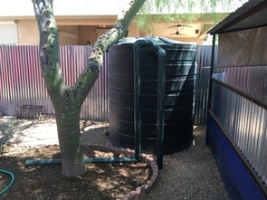 Water harvesting system for irrigating native trees (Photo: Ann Marie Wolf)