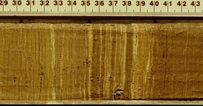 This sediment core taken from Lake Bosumtwi, Ghana shows the layers of sediment that were deposited in the lake annually. The layers provide a means of reconstructing the region's past climate. A meter stick lies alongside the core for scale. (Credit Timothy M. Shanahan and Winston Wheeler)