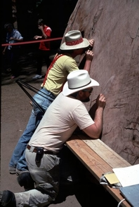 (Click to enlarge) Researchers Peter Brown and Tom Swetnam dating the tree-rings and fire scars on a cross-section of a giant sequoia tree displayed near the General Sherman Tree in Sequoia National Park. (Credit: Tony C. Caprio)