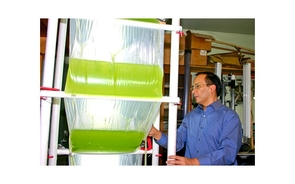 UA researcher Joel Cuello designed the Accordion photobioreactor, which lets scientists control growth conditions for algae while producing them on a large scale. (Photo courtesy of Joel Cuello)