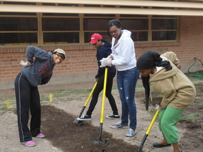 Members of Iota Tau, the UA's Alpha Kappa Alpha chapter, have engaged in a range of off campus service projects, including the construction of plots while helping a local elementary school plant trees.  (Photo courtesy of Cache Phillips-Morris)