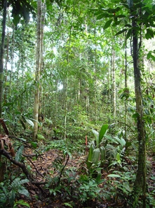 Tropical ecosystems have long been recognized as regions of higher biodiversity compared with temperate latitudes. The underlying causes for this pattern remain unclear.