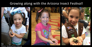 Anissa Aldecoa has attended every year of the Arizona Insect Festival. She is shown holding a Western Hercules Beetle at the 2011, 2013 and 2015 festivals. (Photos: Vanessa Rivera Aldecoa)