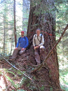 Sean Michaletz (left) and Brian Enquist take a break from measuring trees in an old-growth forest in Oregon. The large tree behind them is an example of an old, large tree with a low growth rate, absorbing carbon from the atmosphere and making food for animals like squirrels and birds. (Photo: Irena Simova)