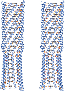A stereo image of the protein helices that assemble to form the DNA-transmitting tube.