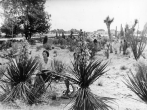 While the UA was officially recognized as an arboretum in 2002, its history actually began long before that, in the 1800s.