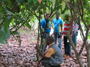 A scientist checks GPS coordinates of a cacao tree that is being monitored for signs of disease. (Photo courtesy of Judy Brown)