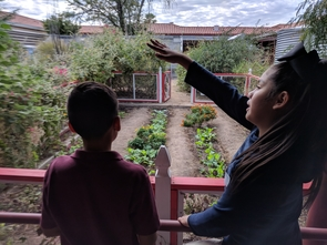 The school garden program at Manzo Elementary School, supported by the UA Community and School Garden Program, teaches students how to cultivate desert-adapted foods that are served in the school cafeteria. (Photo: Jonathan Mabry)