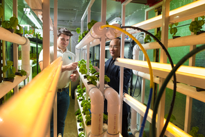 Joel Cuello and biosystems engineer senior Adrian Valois examine basil growing in the Arizona Green Box. Cuello hopes to use robotics to automate many of the systems in the vertical farm operation. (Photo: Bob Demers/UA News)