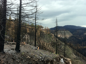 This picture shows the aftermath of the Las Conchas fire, which burned in the Jemez Mountains of New Mexico in June and July. The dead trees in the foreground are ponderosa pine that were killed by the fire. The house on the cliff in the middle of the picture survived the fire by chance. The foundation of another home that burned can be seen in the foreground in the lower left, just behind some blackened trees. (Photo credit: Thomas W. Swetnam/UA Laboratory of Tree-Ring Research)