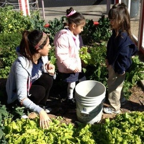 UA intern Kate Sornsin helped harvest vegetables with Manzo Elementary preschoolers.