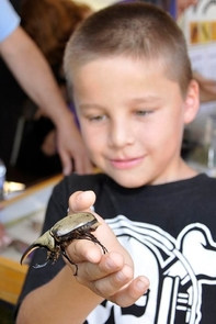 With the aid of a Community Connection Grant, the Arizona Insect Festival attracted community members of all ages to the UA Mall to learn more about the world of insects. (Photo by Chip Hedgcock)