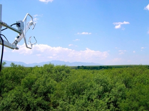 View from a flux tower across a mesquite forest. (Photo: G. Barron-Gafford)