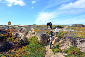 In Tijuana, art students joined the BioBlitz, identifying 73 species of plants, birds, lizards and insects. Ice plants, mule fat, jojoba and goldenaster are among the plants found near the beaches of Tijuana. (Photo: Michelle Capistran)