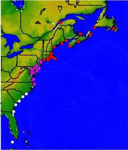 By using historical data from the 40 tide gauges shown on this map, UA geoscientist Paul Goddard and his colleagues determined that sea level rose four inches from New York to Newfoundland (red dots) in 2009 and 2010. Gauges from New York south to Cape Hatteras (pink dots) showed a smaller spike in sea level for the same time period. No sea level spike was recorded on the gauges (white dots) south of Cape Hatteras. (Image credit: Paul Goddard/UA Department of Geosciences)