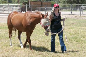 UA student Natasha Dush didn't have any horse experience prior to attending the UA. Now she is planning a career in the equine industry. (Photo: Stacy Pigott/UANews)