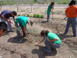 Teenage residents of the San Carlos Apache Juvenile Rehabilitation and Detention Center work alongside staff from the center and from UA Cooperative Extension to cultivate the land and plant new seeds to begin spring gardening. (Photo by Bryce Barnes)