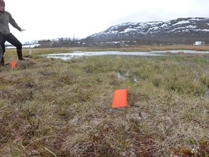 Flags are placed to designate sampling locations at the field site in Sweden. Rose Vining is working with Moira Hough (pictured here) as part of a research team investigating permafrost, which is thawing under the effect of a changing climate. (Photo courtesy of Rose Vining)