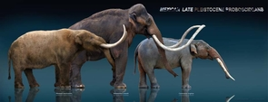 These sculptures, made by Mexican artist Sergio de la Rosa, show three elephant ancestors (from left): the mastodon, the mammoth and the gomphothere. (Photo: Sergio de la Rosa)