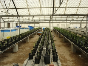 """The """"re-circulating integrated agriculture aquaculture,"""" or RIAA, system technology is expected to advantage a wide range of agriculturalists when the UA-student created technology makes it way to the market."""
